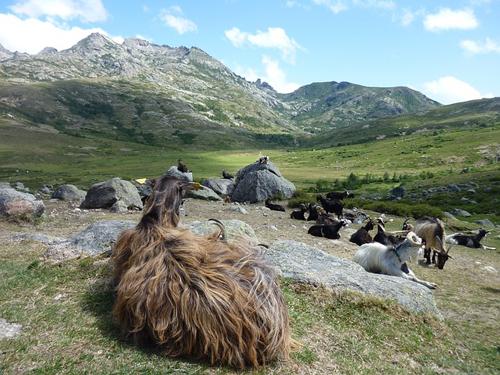 Une montagne en Corse
