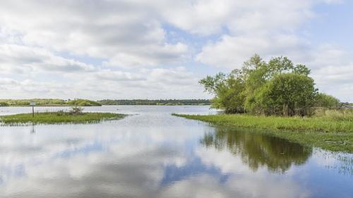 Marécage dans le Pays de la Loire